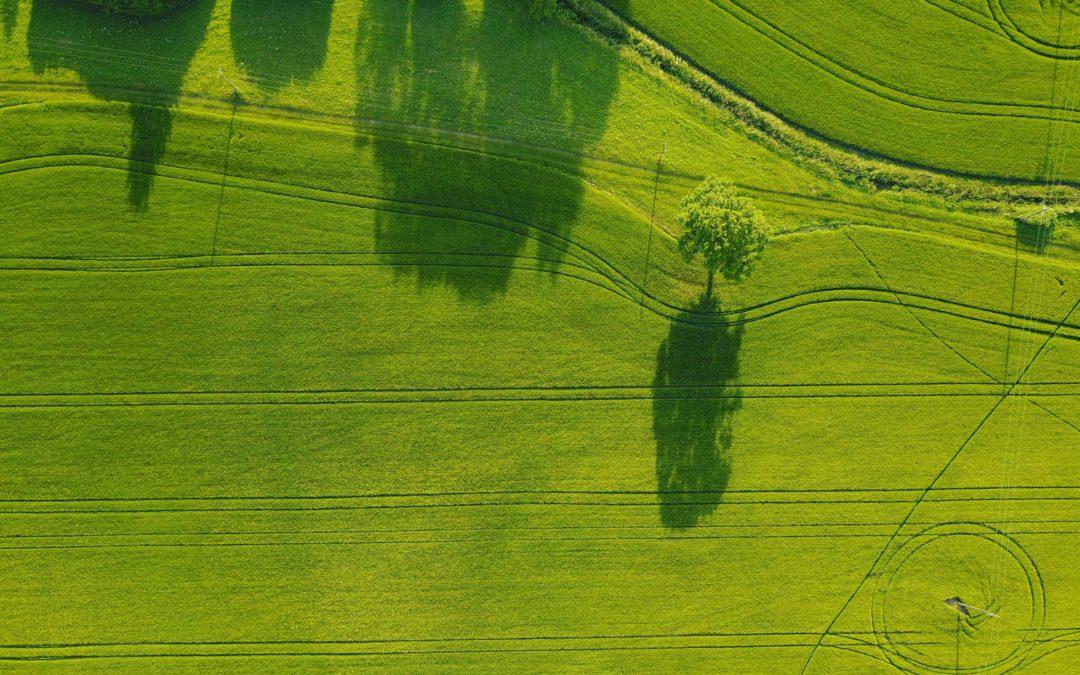 Greenium – fact or fiction?